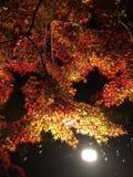 grafika liść klonowy czerwieni wektor Zdjęcia Stock