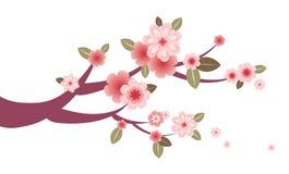 grafiki okwitnięcia gałąź czereśniowy drzewo Zdjęcia Royalty Free
