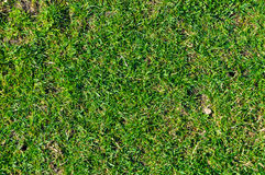 grafiki trawy ilustracyjna tekstura twój Obraz Royalty Free