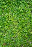 grafiki trawy ilustracyjna tekstura twój Zdjęcie Royalty Free