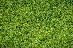 grafiki trawy ilustracyjna tekstura twój Fotografia Stock