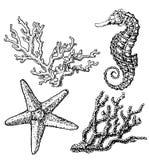 Grafisch koraalrif met zeepaardje, overzeese ster, zeester, zeewier, koralen, onder overzees thema, reeks elementen voor marine vector illustratie