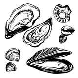 Grafisch vectordiemosselen, oesters en weekdier in schetsstijl worden getrokken Royalty-vrije Stock Fotografie
