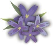 Grafisch viooltje Stock Fotografie