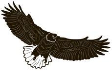 Grafische Art des Bildes des Adlers auf weißem Hintergrund Lizenzfreie Stockfotografie