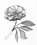 Grafische bloem Royalty-vrije Stock Afbeeldingen