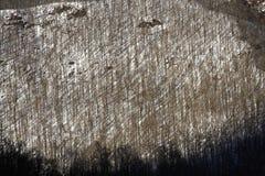 Grafische kunst van de winterbos Royalty-vrije Stock Afbeeldingen