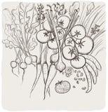 Grafische Linie Hintergrund des Gemüses Lizenzfreies Stockbild