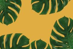 Grafische samenstelling van bladeren op oranje achtergrond Stock Foto