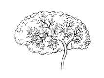 Grafische schets van menselijke hersenen met binnen boom royalty-vrije illustratie