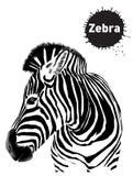 Grafische uitstekende reeks zebras, schets voor ontwerp stock illustratie