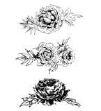 Grafische zwart-witte pioen Royalty-vrije Stock Afbeeldingen