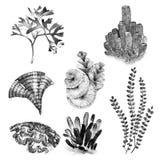 Grafischer Korallensatz Aquariumkonzept für Tätowierungskunst oder T-Shirt Design lokalisiert auf weißem Hintergrund Stockfoto