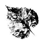 Grafisches Blatt auf weißem Hintergrund, botanische Illustration des Aquarells, Hand gezeichnete Art, malendes Schattenbild für stock abbildung