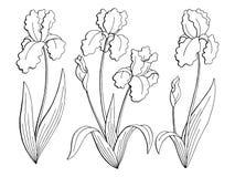 Grafisches schwarzes Weiß der Irisblume lokalisierte gesetzten Vektor der Skizzenillustration Lizenzfreie Stockfotos
