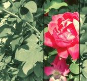 Grafisk design för HD-blomma Arkivfoto