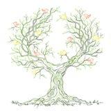 Grafisk grön branchy tree för vektor med fåglar Arkivbild