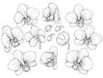 Grafisk orkidé Royaltyfri Fotografi