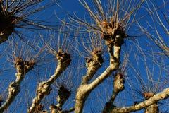 Grafisk sammansättning av trädfilialer mot den blåa himlen royaltyfria bilder