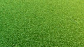 Grafiska resurser Bakgrund för natur` s Grönt gräs Vektor Illustrationer
