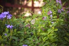 Grafito floreciente con la mariposa en ella profundidad baja o del primer Foto de archivo