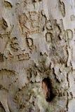 Grafittis 1 da árvore Fotografia de Stock Royalty Free