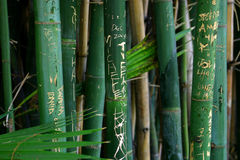 Grafittis da selva Fotografia de Stock