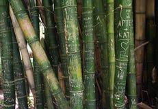 Grafittis no bambu imagem de stock royalty free