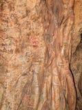 Grafittiträd royaltyfri foto