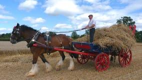 Grafschafts-Pferd an einem Arbeitstag-Land-Zeigung in England Lizenzfreies Stockfoto