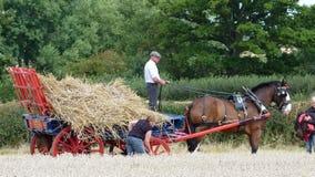 Grafschafts-Pferd an einem Arbeitstag-Land-Zeigung in England Lizenzfreie Stockbilder