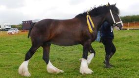 Grafschafts-Pferd an einem Land-Zeigung in Großbritannien Lizenzfreies Stockbild
