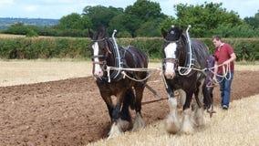 Grafschafts-Pferde an einem Arbeitstag-Land-Zeigung in England Lizenzfreies Stockbild