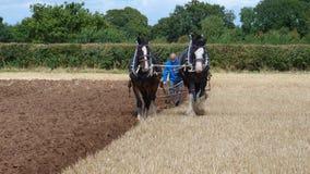 Grafschafts-Pferde an einem Arbeitstag-Land-Zeigung in England Lizenzfreie Stockbilder