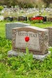 Grafsteen in een begraafplaats met één rode tulp Stock Foto's