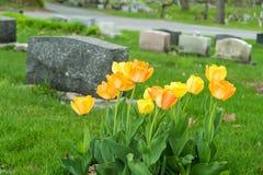 Grafstenen in een begraafplaats met tulpen Stock Fotografie