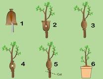 The graft plants Stock Photo