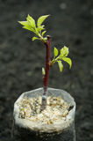 Grafting stock images