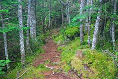 Grafton Notch State Park in Maine. Trail through the forest at Grafton Notch State Park in Maine Stock Image