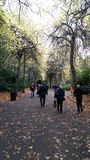 Grafton Park, Dublin, Ireland, pleasant walk in the Fall royalty free stock photo
