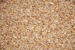 Grain images libres de droits