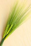 Grain. Fresh green grain on wooden background Stock Photo