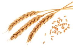 Free Grain And Ears Of Wheat Isolated On White Background. Top View Royalty Free Stock Photography - 111437767