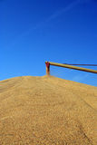 Grain auger at work. Huge piles of corn being stored outside on the ground because the grain elevator storage bins were filled to capacity Royalty Free Stock Images