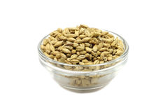 Grain barley malt in a glass container. On a white background Stock Image