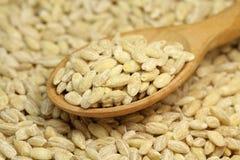 Grain barley in wooden spoon Stock Photo