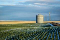 Grain bin, winter wheat fields royalty free stock photography