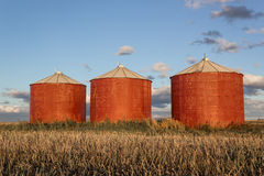 Grain bins. Red grain bins in the evening light under a blue sky Stock Photos