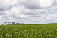 Grain bins and soy bean crop Royalty Free Stock Photography