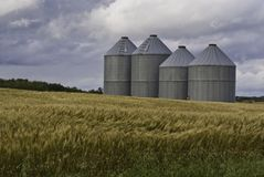 Grain bins in wheat field Royalty Free Stock Image